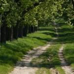 cycling_Moravia-3