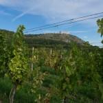cycling_Moravia-54