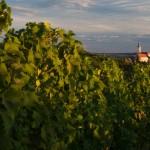 cycling_Moravia-71