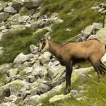 hiking_trekking_Poland_Carpates_Tatras-16