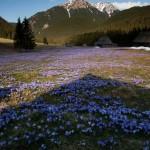 Randonnée en Pologne Tatras Karpates