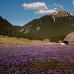 hiking_trekking_Poland_Carpates_Tatras-82