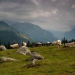hiking_trekking_Poland_Carpates_Tatras-90